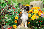 PUP 27 CE0047 01