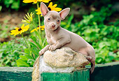 PUP 27 CE0048 01