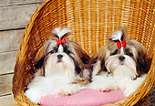 PUP 27 CE0053 01