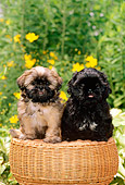 PUP 27 CE0055 02