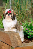 PUP 27 CE0056 01