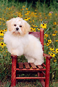PUP 27 CE0061 01