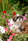 PUP 27 CE0063 01