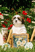 PUP 27 CE0064 01