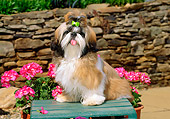PUP 27 CE0066 01