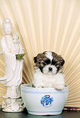 PUP 27 CE0067 01
