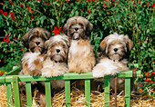 PUP 27 CE0068 01