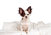 PUP 27 CW0006 06