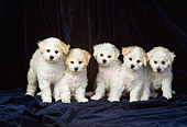 PUP 27 DC0004 02