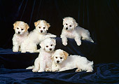 PUP 27 DC0005 02