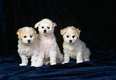 PUP 27 DC0005 08