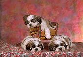 PUP 27 RC0001 01