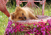 PUP 27 RC0002 01
