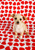 PUP 27 RC0010 01