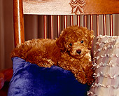 PUP 27 RK0001 09