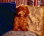 PUP 27 RK0004 02