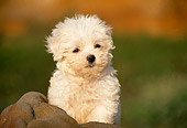 PUP 27 RK0015 01