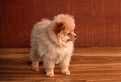 PUP 27 RK0024 02