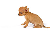 PUP 27 RK0045 04