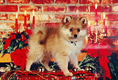 PUP 27 RK0070 03