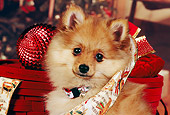 PUP 27 RK0074 04