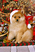 PUP 27 RK0078 02