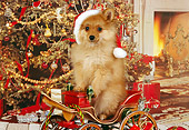 PUP 27 RK0081 01