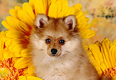 PUP 27 RK0085 04