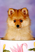 PUP 27 RK0088 01