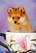 PUP 27 RK0088 03
