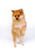 PUP 27 RK0096 06