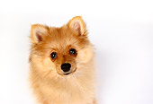 PUP 27 RK0097 05