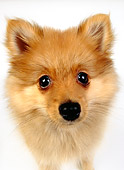PUP 27 RK0098 03