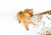 PUP 27 RK0102 04