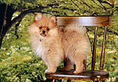 PUP 27 RK0106 01