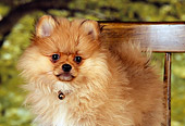 PUP 27 RK0107 01