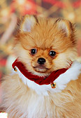 PUP 27 RK0111 01