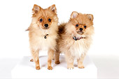 PUP 27 RK0113 01