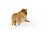 PUP 27 RK0118 01