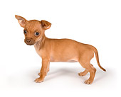 PUP 27 RK0167 01