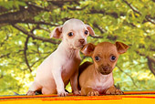 PUP 27 RK0179 01