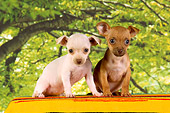 PUP 27 RK0181 01