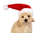 PUP 27 RK0189 01