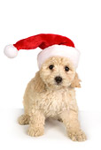 PUP 27 RK0190 01