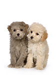 PUP 27 RK0204 01