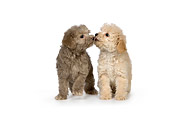 PUP 27 RK0207 01