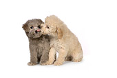 PUP 27 RK0209 01