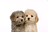 PUP 27 RK0210 01