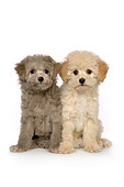 PUP 27 RK0212 01