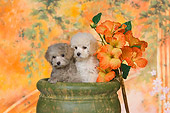 PUP 27 RK0213 01